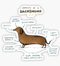 Anatomy of a Dachshund Sticker