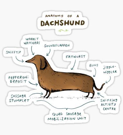 Anatomy of a Dachshund Sticker