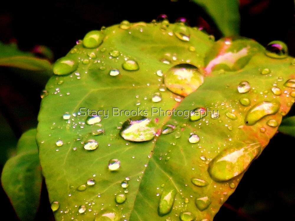After the Rain by Stacy Brooks Photography