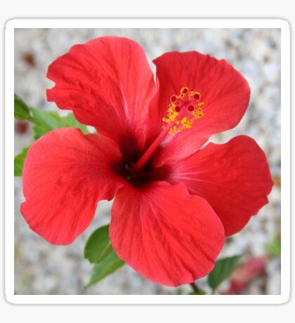 A Stunning Scarlet Hibiscus Tropical Flower Sticker