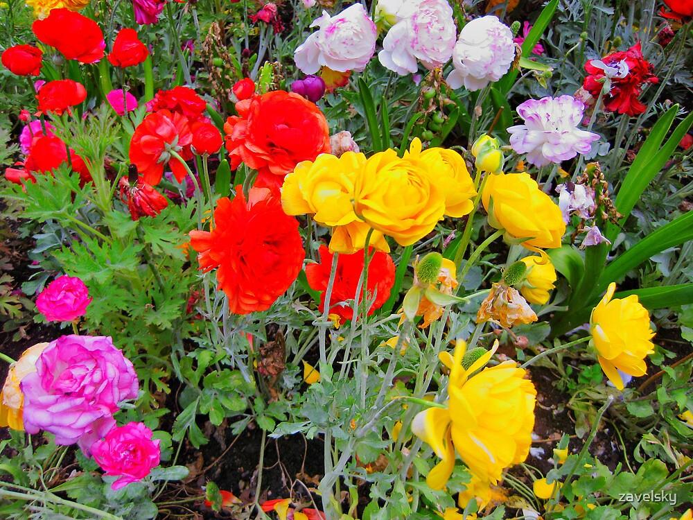 RosesWYR by zavelsky