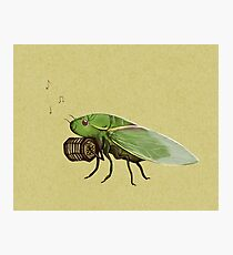 Cicada Playing a Squeezebox Photographic Print