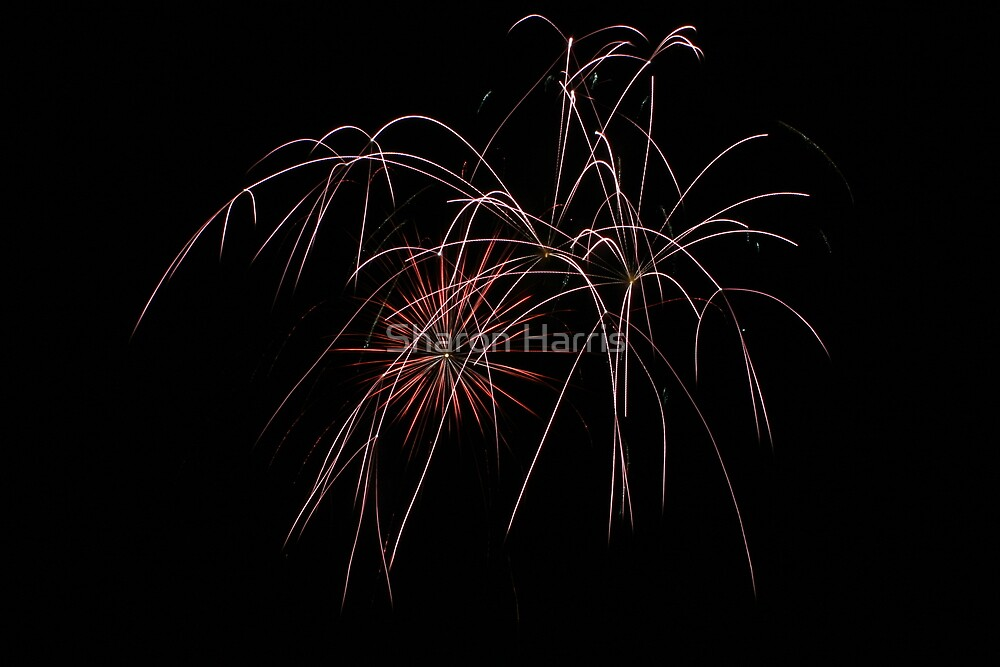 Fireworks by Sharon Harris