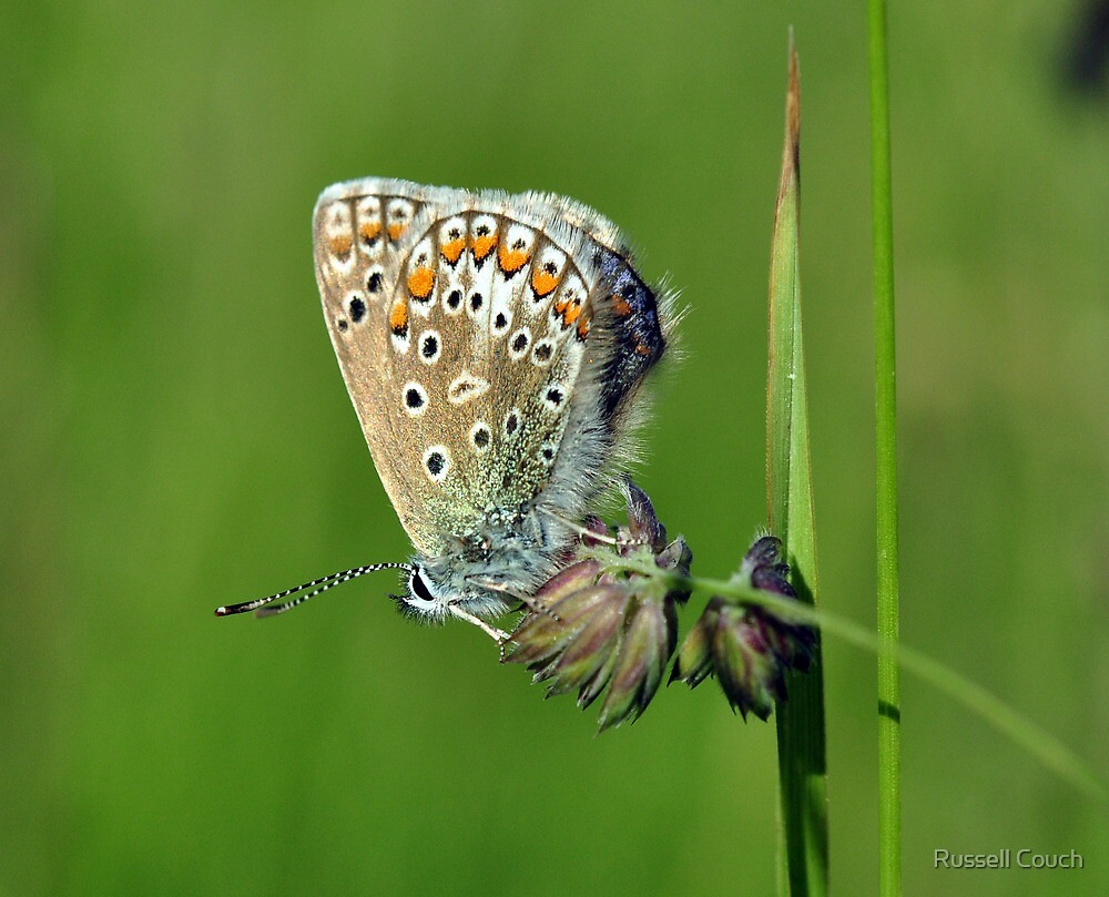 Little Blue by Russell Couch