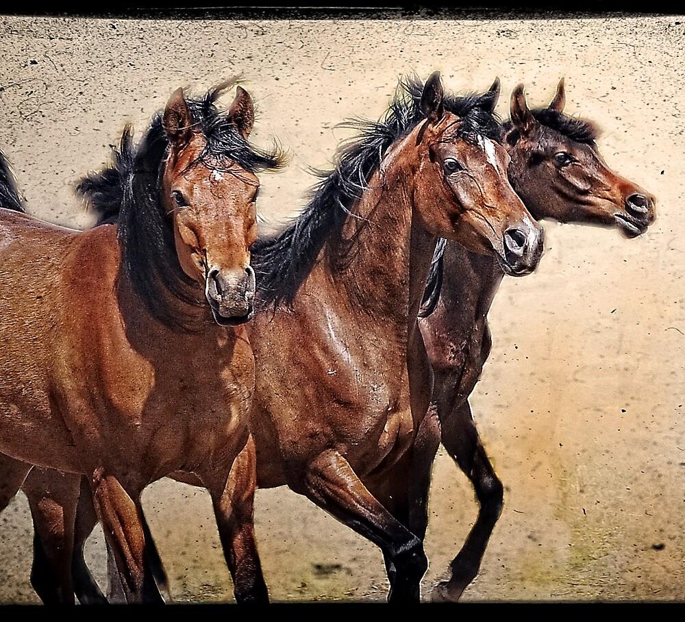 Arabian Princes by Alan Mattison
