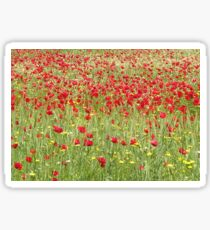 Meadow With Beautiful Bright Red Poppy Flowers Sticker