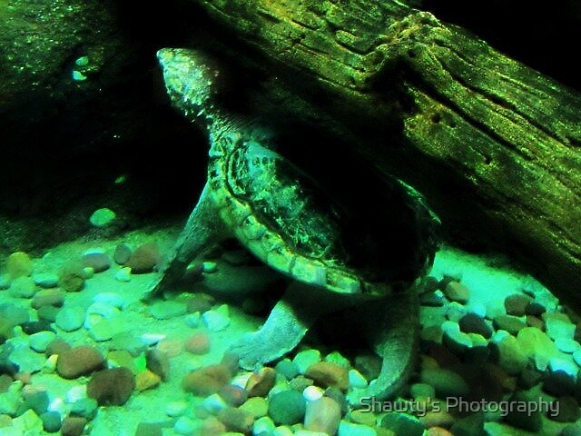 Underwater Tortoise by Shawty's Photography