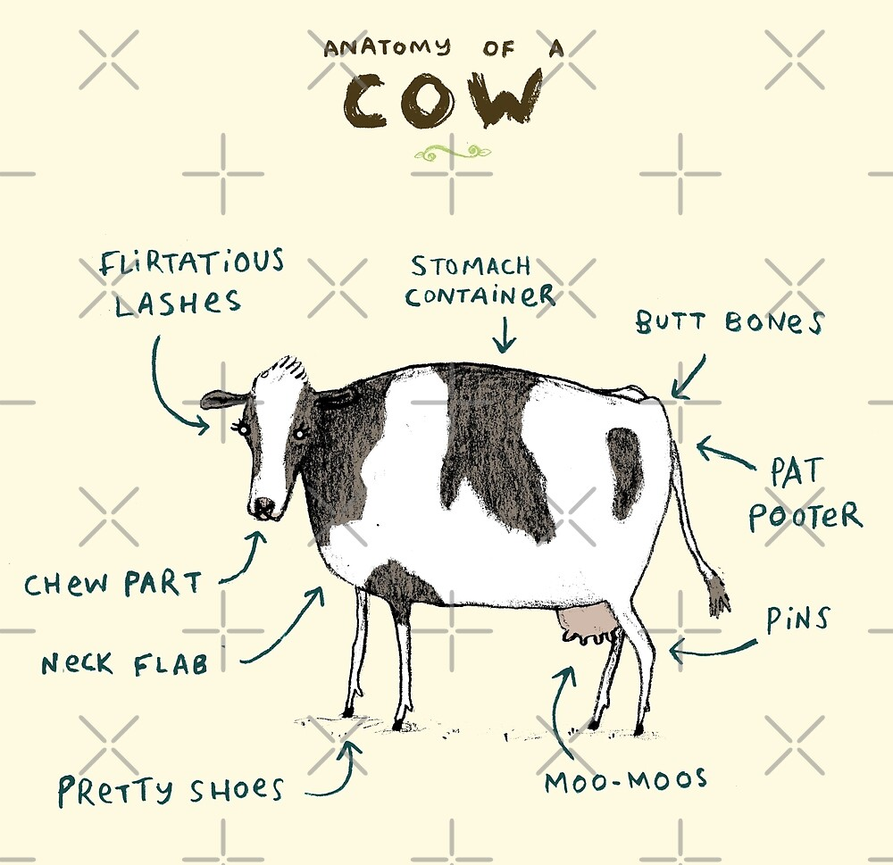 Anatomy Of A Cow By Sophie Corrigan Redbubble