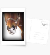 Winter Horse Postcards
