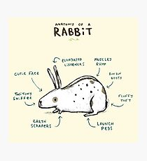 Anatomy of a Rabbit Photographic Print