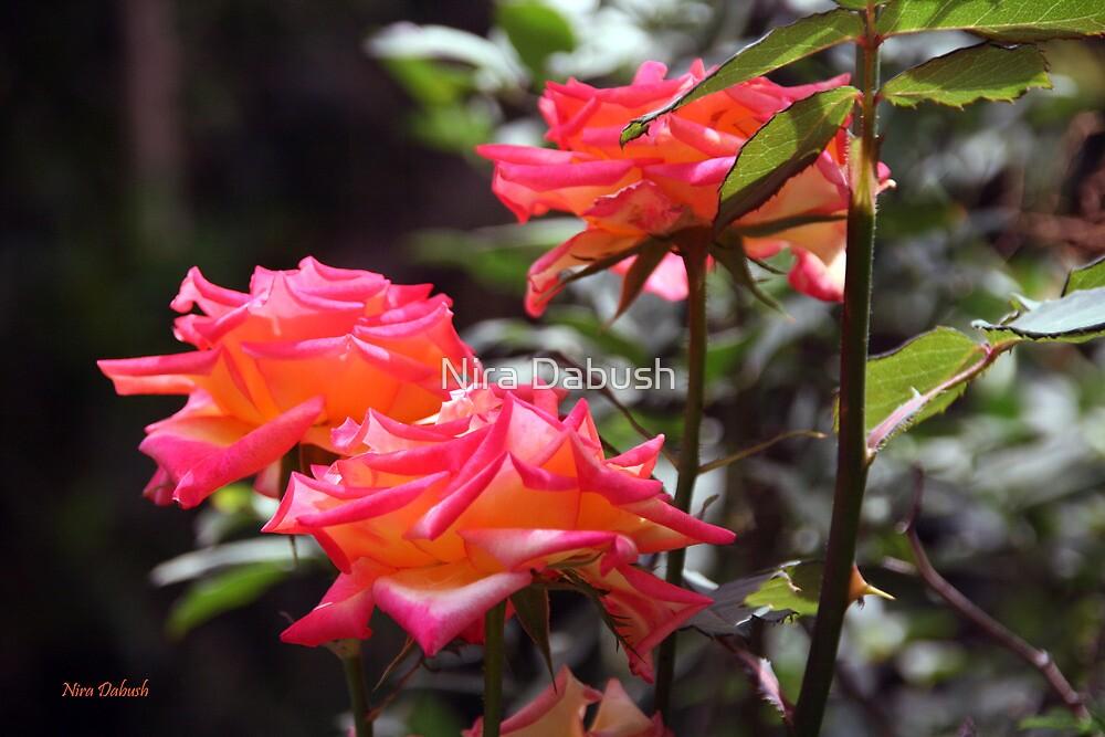 Roses at the Garden by Nira Dabush