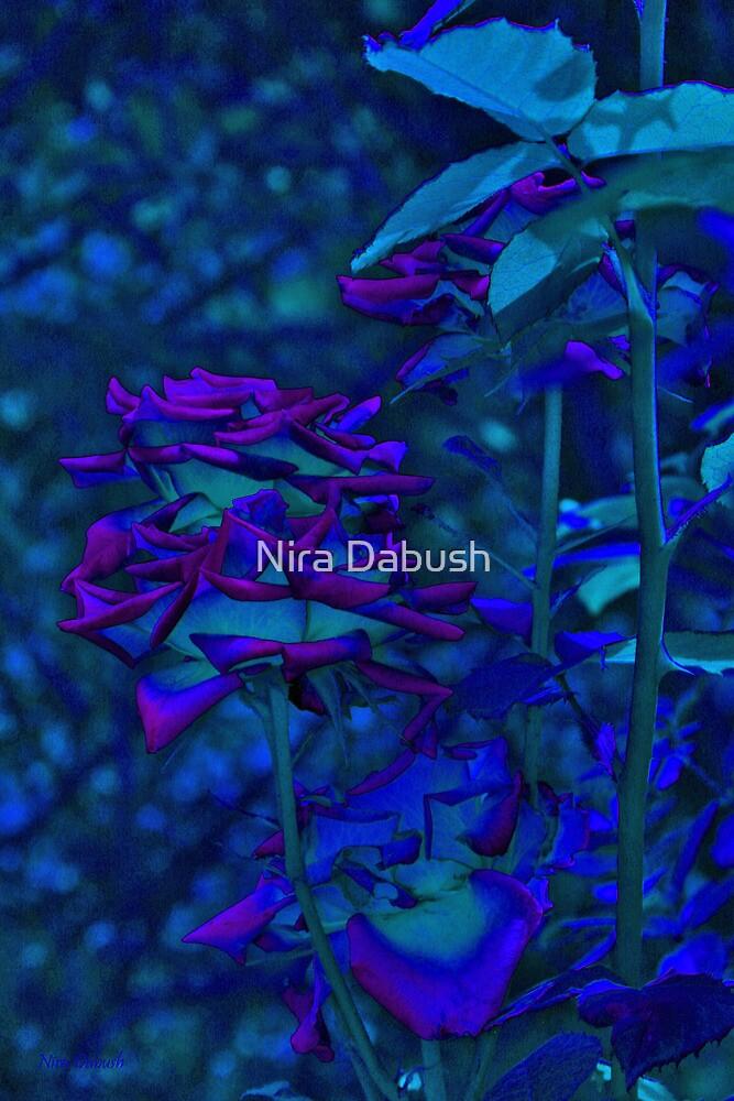 Midnight Ink by Nira Dabush