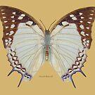 Newab Butterfly by Walter Colvin