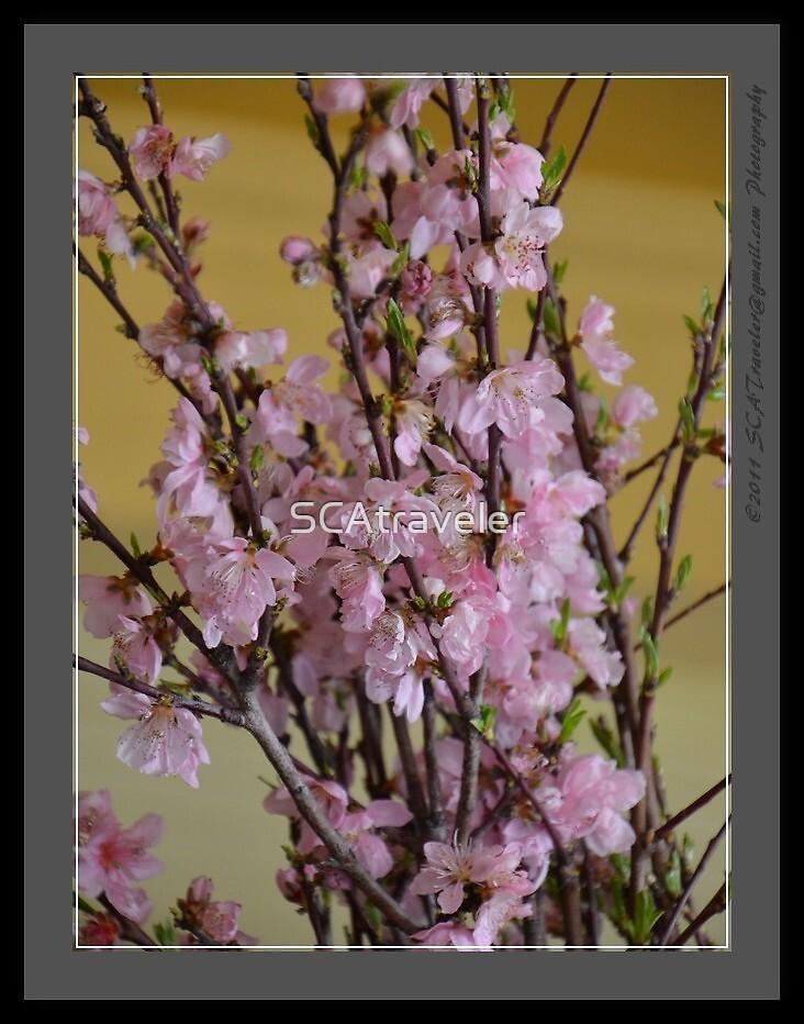 Pink Flowers by SCAtraveler