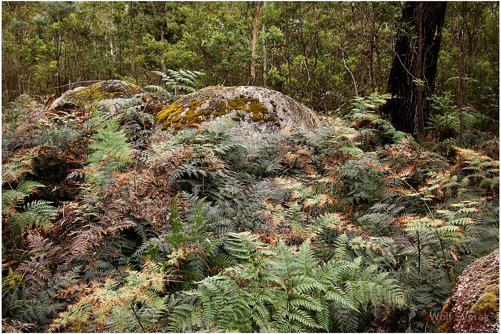 Tidbinbilla Nature Reserve - The Sanctuary by Wolf Sverak