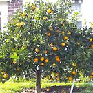 Orange tree by AmandaWitt