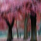 Group of Trees in Motion - red by KUJO-Photo