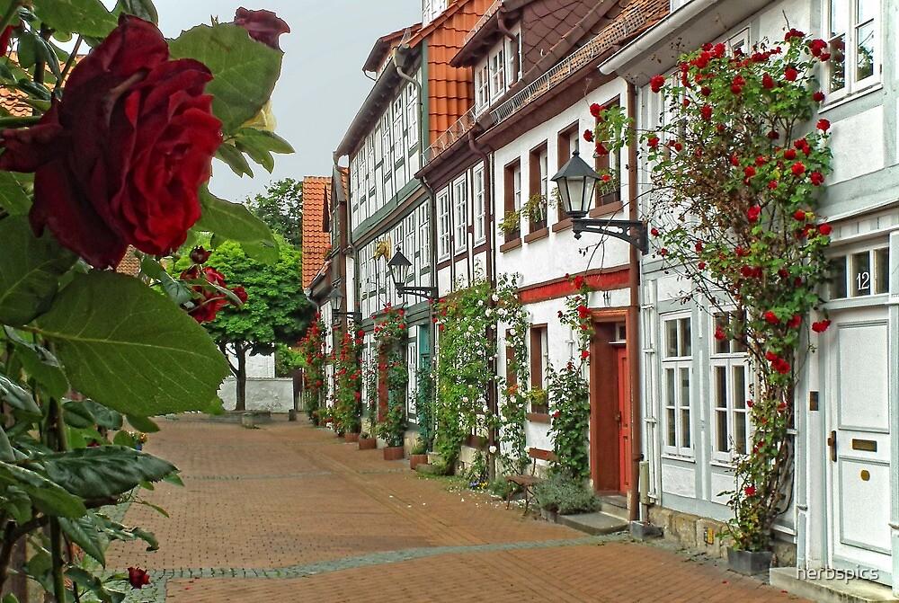 Rosetree Lane by herbspics