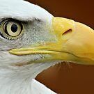 Bald Eagle profile by Mark Bunning