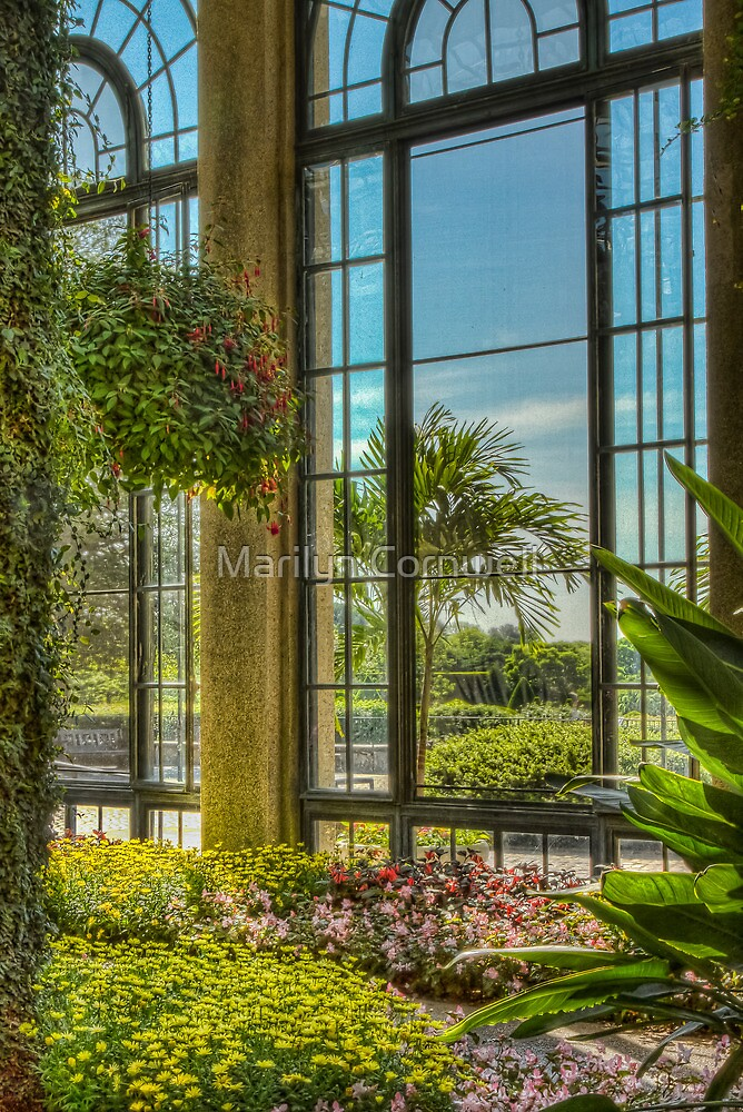 A View with A Window by Marilyn Cornwell