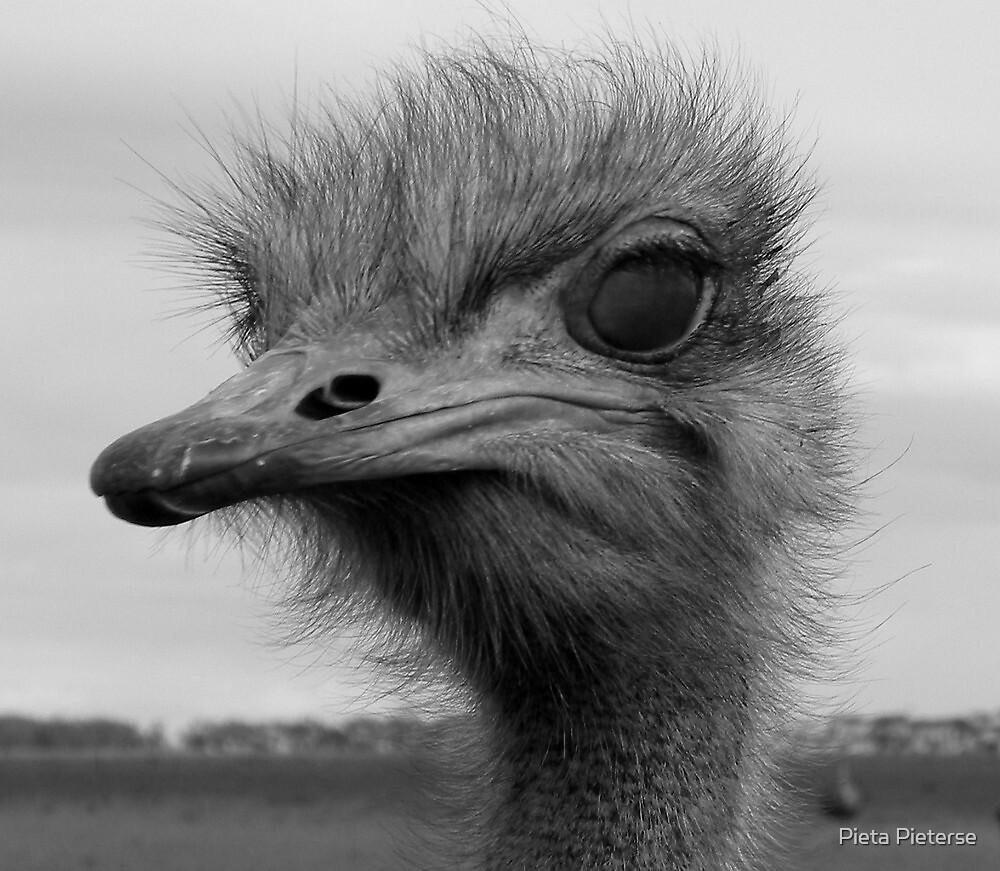 You like my hairdo? by Pieta Pieterse