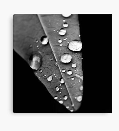 Water drop on leaf IV Canvas Print