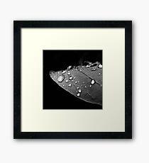 Water drop on leaf V Framed Print