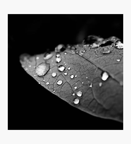 Water drop on leaf V Photographic Print