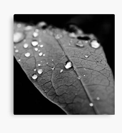 Water drop on leaf VI Canvas Print