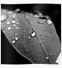 Water drop on leaf VI Poster