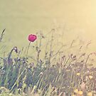 Where the Wild Flowers Grow by LoveSMP