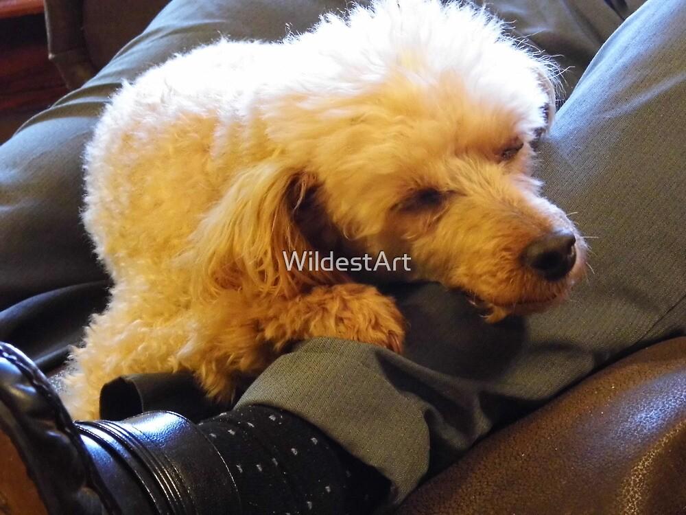 Letting Sleeping Dogs Lie...(on legs...) by WildestArt