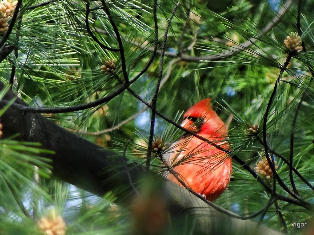 Backyard Bird by vigor