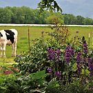 The Cows In The Meadow by scenebyawoman