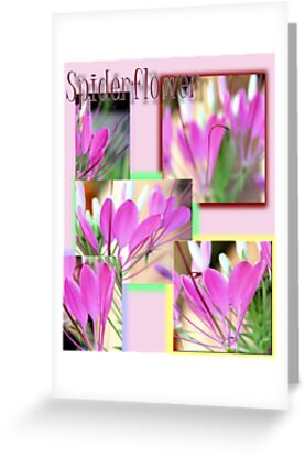 Spiderflower Collage by aprilann