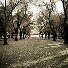 Autumn To Winter by Jamie  Druitt