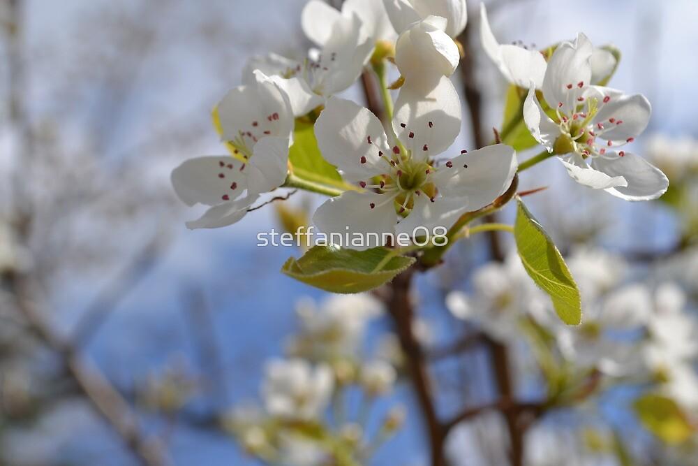 Apple Blossoms by steffanianne08