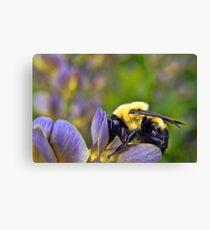 Sweet Sweet Pollen Canvas Print