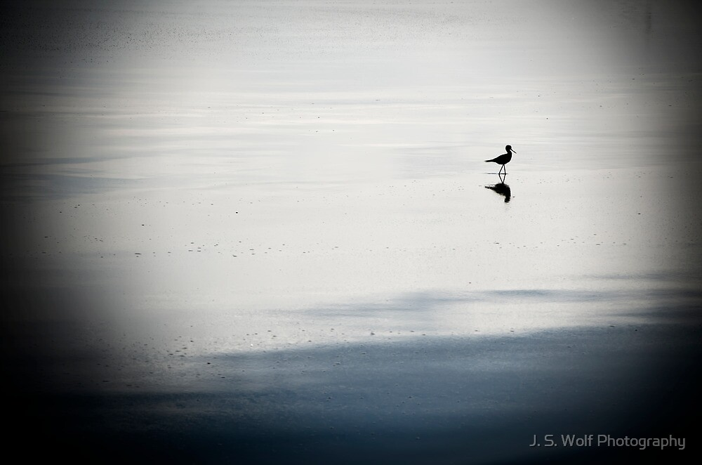 Bird on Water by jswolfphoto