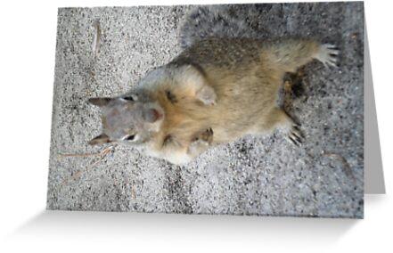 Fighting Squirrel! by EarthPhoenix