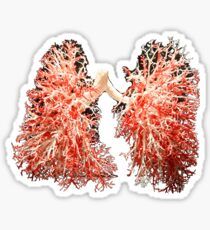 Real lungs - Respiratory system Sticker
