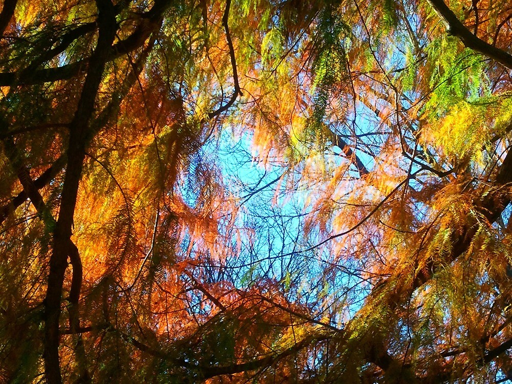 Winter Trees by kahoutek24
