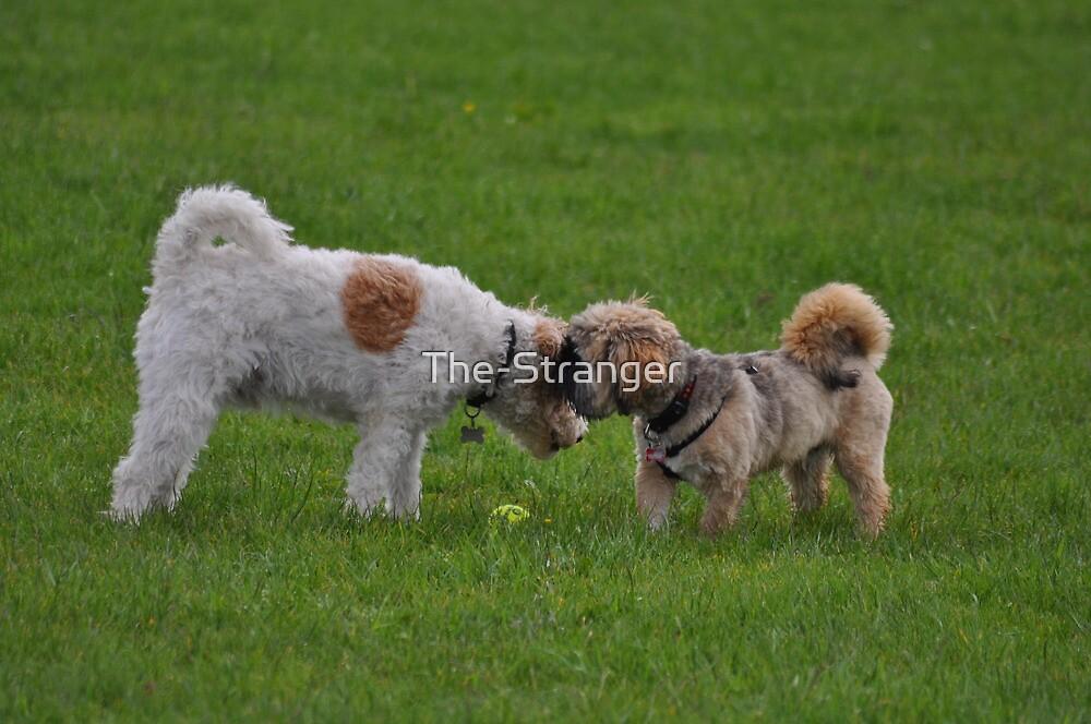 The Canine Whisperer... by The-Stranger