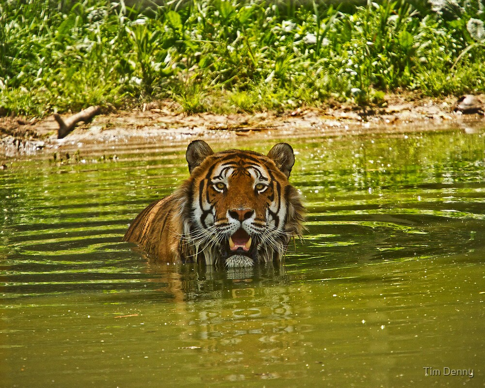 At The Watering Hole by Tim Denny