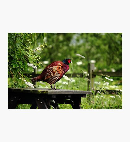 Table ready bird Photographic Print
