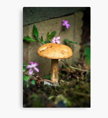 Wonderland mushroom Canvas Print