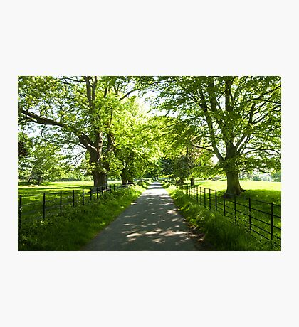 Beautiful Back Road Photographic Print