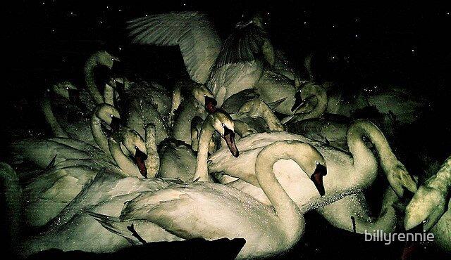 feeding at night by billyrennie