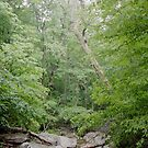 Green Timberland by Joshua Hoppock