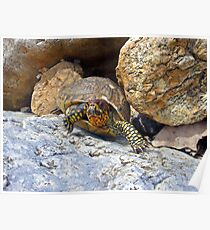 Camouflage Turtle  Poster
